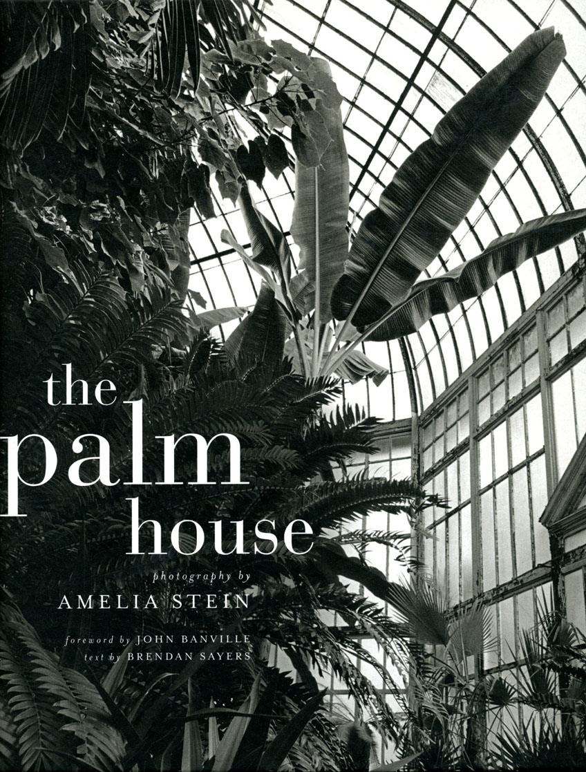 The Palm House: Amelia Stein